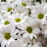 White gentle soft daisy flowers. Wedding romantic concept. Floral background