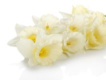 The white, gentle spring flowers Stock Photography