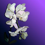 White geometric orchid. Vector white orchid on the purple background Stock Photos