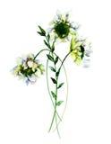 White Gerber flowers, Stock Photos