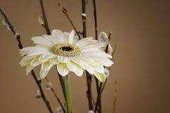 White gerbera. White herbera on brown background Stock Image