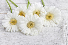 White gerbera daisies on wooden background