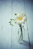 White gerbera flower in a vase on wooden background Stock Photo
