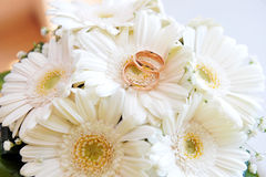 White gerbera and wedding rings Royalty Free Stock Image