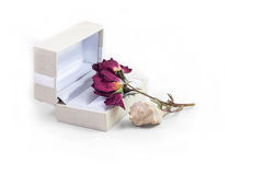 White gift box with dried flower and seashell with white background. White gift box opened with dried flower and beautiful seashell on the white background Stock Photo