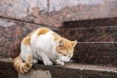 White ginger cat eats small fish on the steps of the granite emb Stock Photo