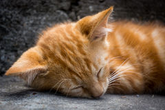 White ginger cat lying and sleeping on the grey stairs.  stock photo