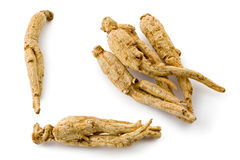 White Ginseng (Panax ginseng) Stock Photo