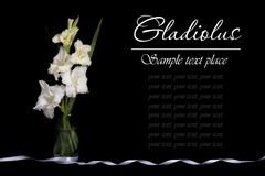 White gladioli in a vase isolated on a black Royalty Free Stock Photos