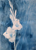 White gladiolus watercolor. With textured background Stock Image