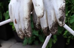 A white glove with clay on fingers after garden work. Hanging on some string stock photos