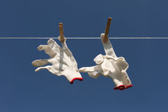 White gloves on clothesline. Stock Image