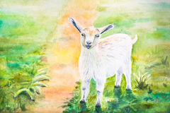 White goat. Watercolor painting of a white goat Stock Images