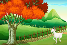 A white goat near the big tree Royalty Free Stock Image