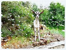 White goat watercolor photo. A white goat photo in watercolor Stock Photography