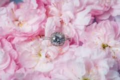 White gold ring with diamonds inside tender pink rose petals. Pink Rose and diamond ring nestled inside. Macro closeup Stock Image