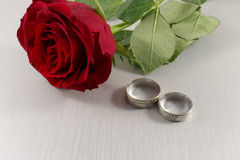 White gold wedding rings and red rose on white background Stock Images