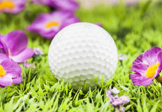 White golf bal. Golf ball on green grass Royalty Free Stock Photography
