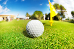 White golf ball on the fairway of course Stock Image