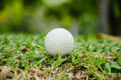 White golf ball Stock Image