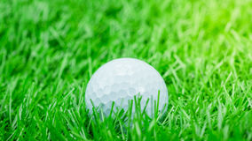 White golf ball is on grass Royalty Free Stock Photography