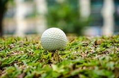 White golf ball Stock Images