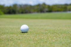 Golf Ball on Green. A white golf ball on the green of a course Royalty Free Stock Images