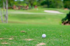 White golf ball on green grass. View of white golf ball on green grass in par3 hole Royalty Free Stock Image