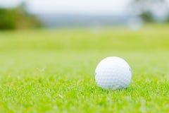 White golf ball on green grass. View of white golf ball on green grass closeup Royalty Free Stock Photos