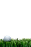 White golf ball in green grass Stock Image