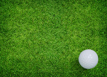 White golf ball on green grass of golf course. Stock Images