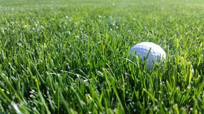 White golf ball in green grass. PGA sport beautiful sunny sunshine royalty free stock photo