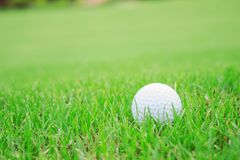 Golf ball on green lawn. White golf ball on the green lawn stock photo