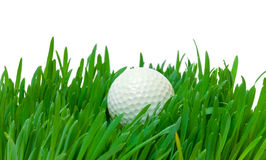 White golf ball in the long grass Stock Photography