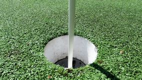 White golf ball rolling in the cup on artificial putting green stock video