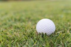 White golf ball sat in green grass