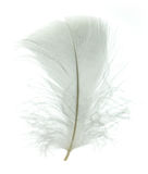 White goose feather Royalty Free Stock Photo