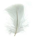 White goose feather Royalty Free Stock Photo