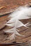 White goose feather. Closeup on tree bark royalty free stock photos