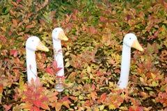 White goose. A portrait of a white goose Royalty Free Stock Photo