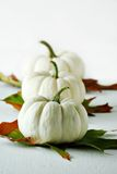 White gourds. Row of white gourds with autumn leaves stock image