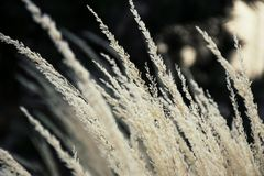 White Grains Photography Stock Photo
