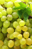 White grape Stock Image