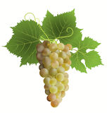 White grape. And green leaves Royalty Free Stock Photos