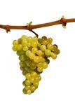 White grape. Fully isolated on white background Stock Photo