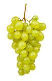 White grape Royalty Free Stock Photo