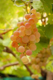 White grape Royalty Free Stock Photography