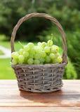 White grape basket Royalty Free Stock Image