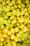 White grape berries (Vitis) background Royalty Free Stock Photos