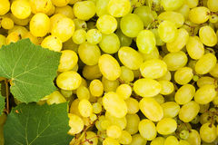 White grape berries (Vitis) background Stock Photos